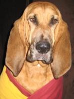 buddhist hound